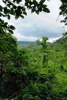 kambodschanischer Dschungel foto