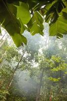 thailändischer Dschungel foto