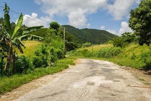Dschungel Kuba foto