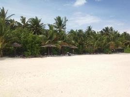 Dschungel und Strand foto