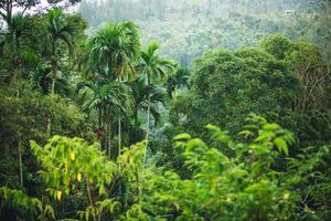 Dschungel von Thailand foto