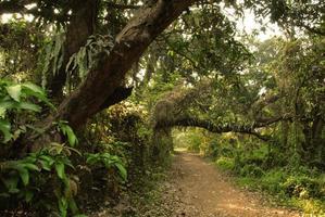 grüner Walddschungel foto