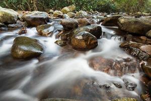 Fluss im Dschungel foto