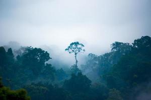 der Baum, der im Dschungel herausragend ist.