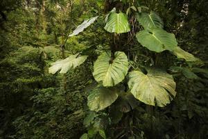 große epiphytenpflanze aus dem dschungel von costa rica foto