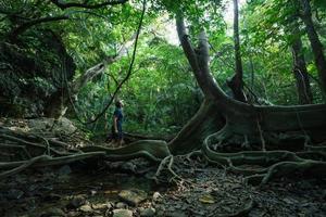 Mann, der tropischen Dschungel mit dem riesigen alten Baum erforscht foto