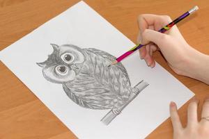Zeichnung der Eule auf einem Blatt Papier foto