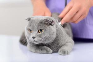 positiver Tierarzt, der eine Katze untersucht foto