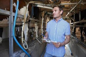 Landwirt, der das Vieh während des Melkens inspiziert foto