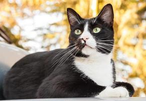 Alarm Schwarzweiss-Katze, die auf Auto sitzt und nach außen schaut