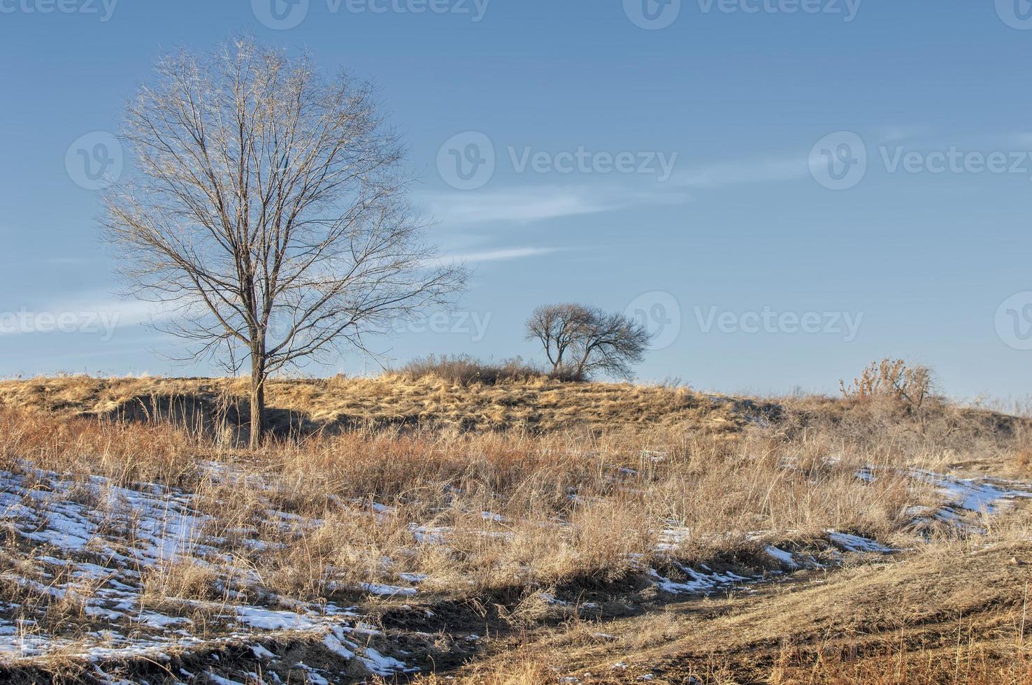 träd täckta med rim foto