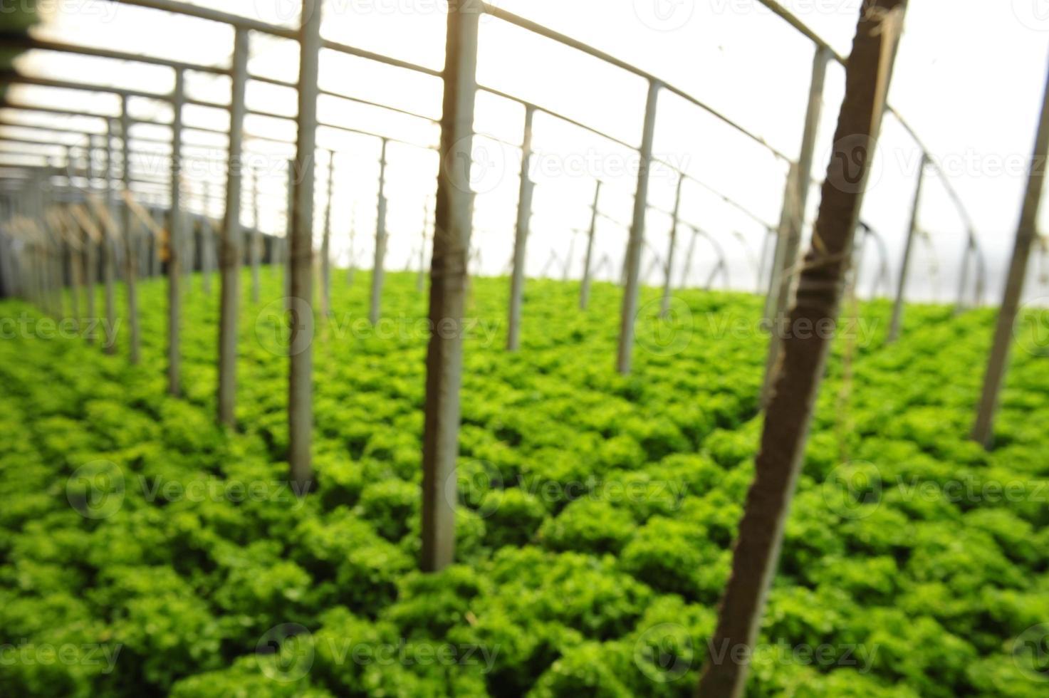 grönsaker i växthus foto