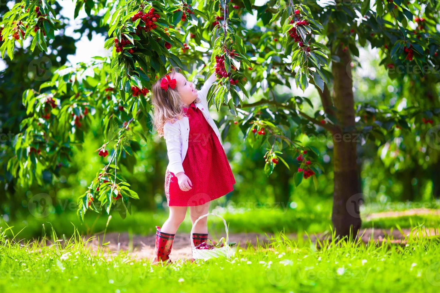 söt liten flicka som plockar färskt körsbärsbär i trädgården foto