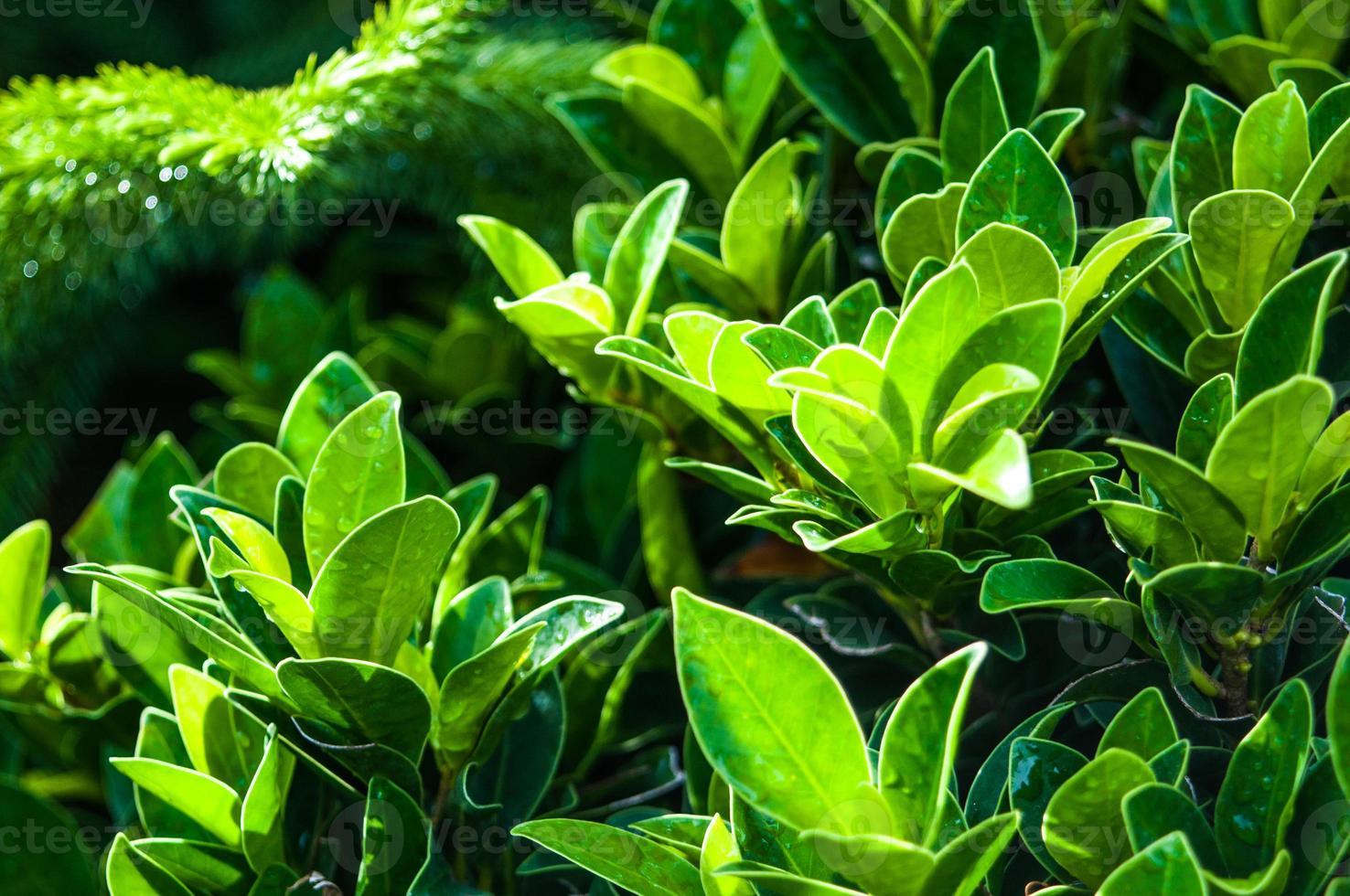 närbild av vackra färska gröna blad foto