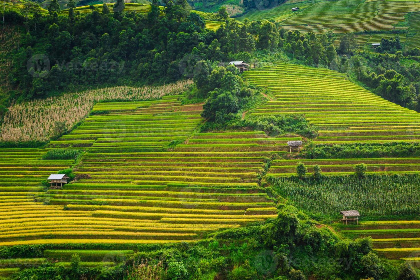 ris terrasser dal i Vietnam foto