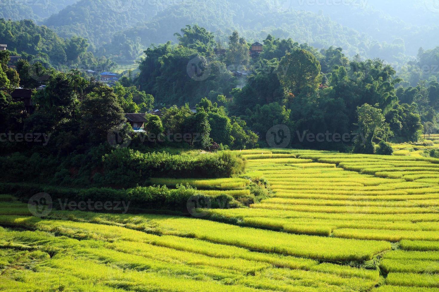 terrasserad rovfält på landsbygden, Chiang Mai, Thailand foto