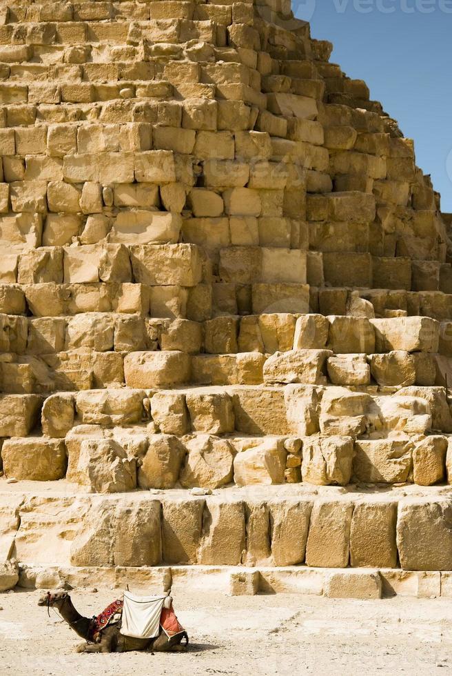 kamel på bakgrunden av egyptiska pyramider foto