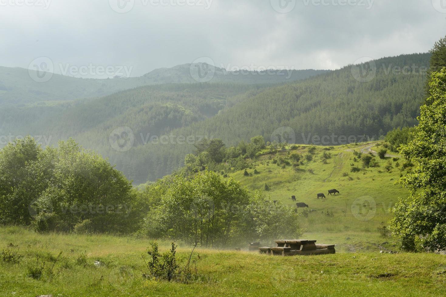 vacker grön skog efter hagelstorm under sommaren foto