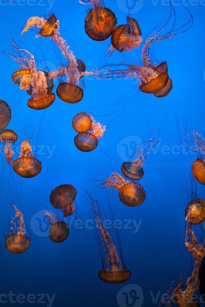 havsliv och fisk under vattnet foto