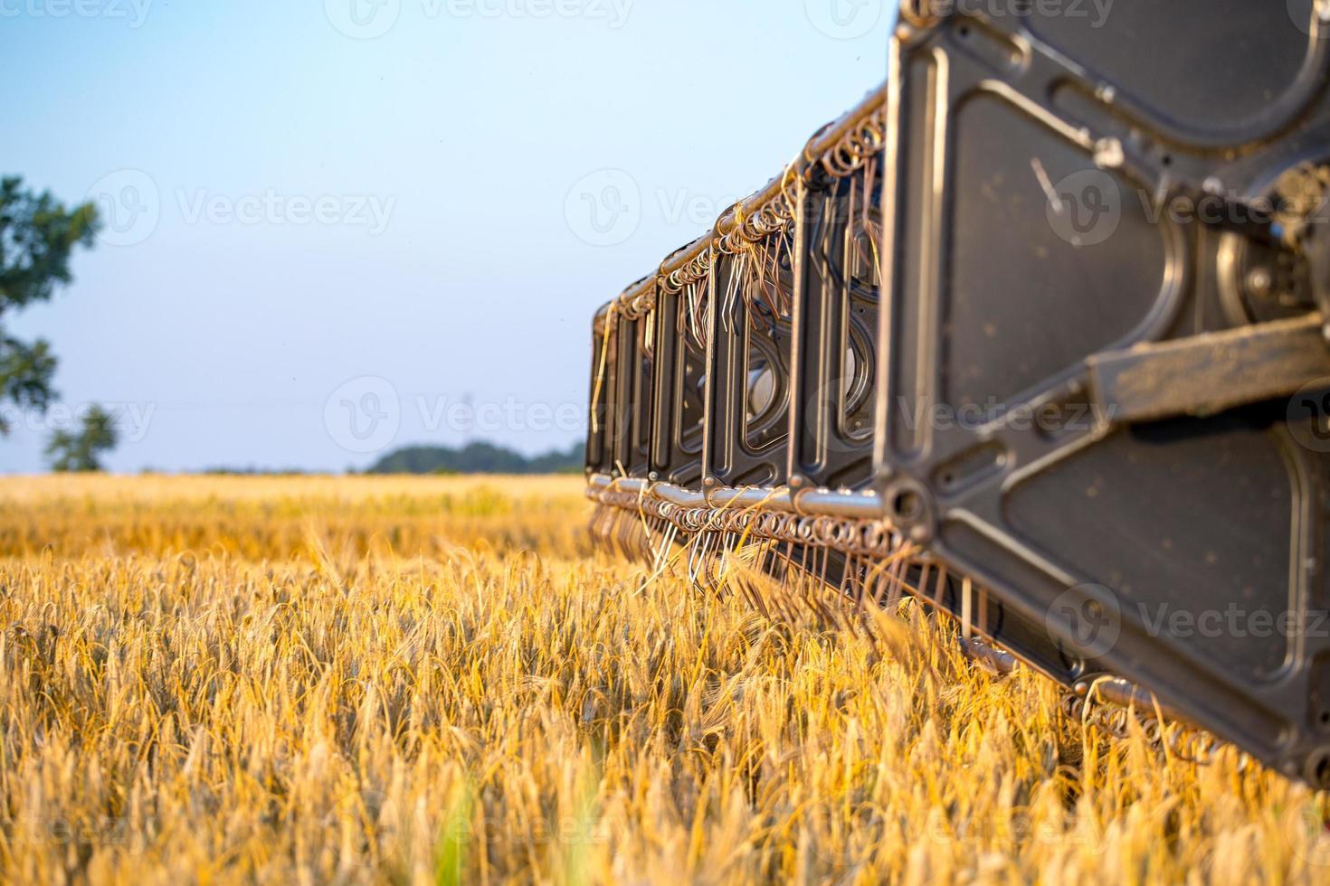 närbild på skördetröska som arbetar på kornfält foto