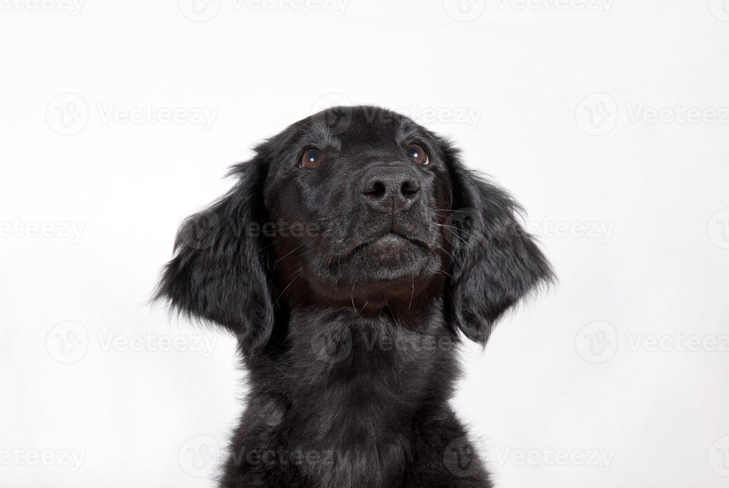 svart valp foto