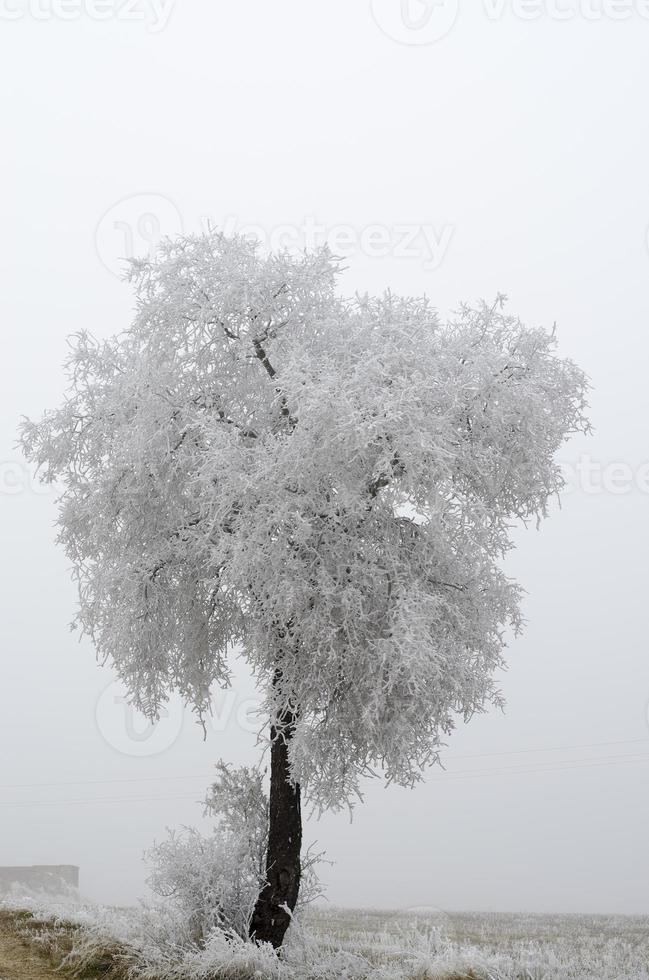 frost på träd foto