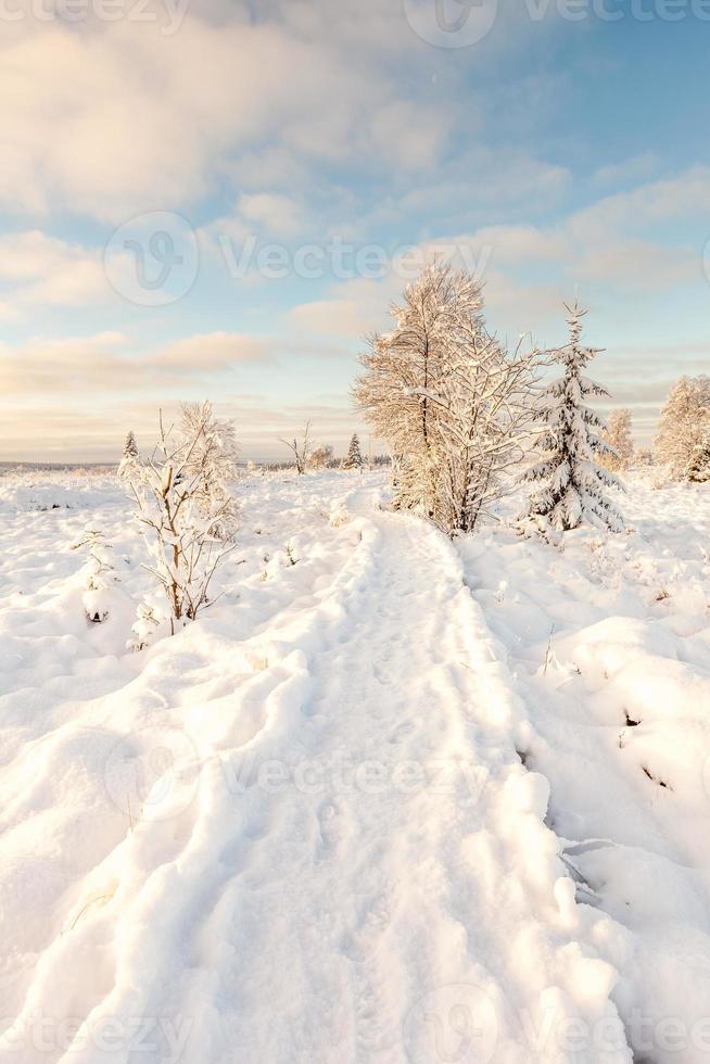 hög venen i snö foto