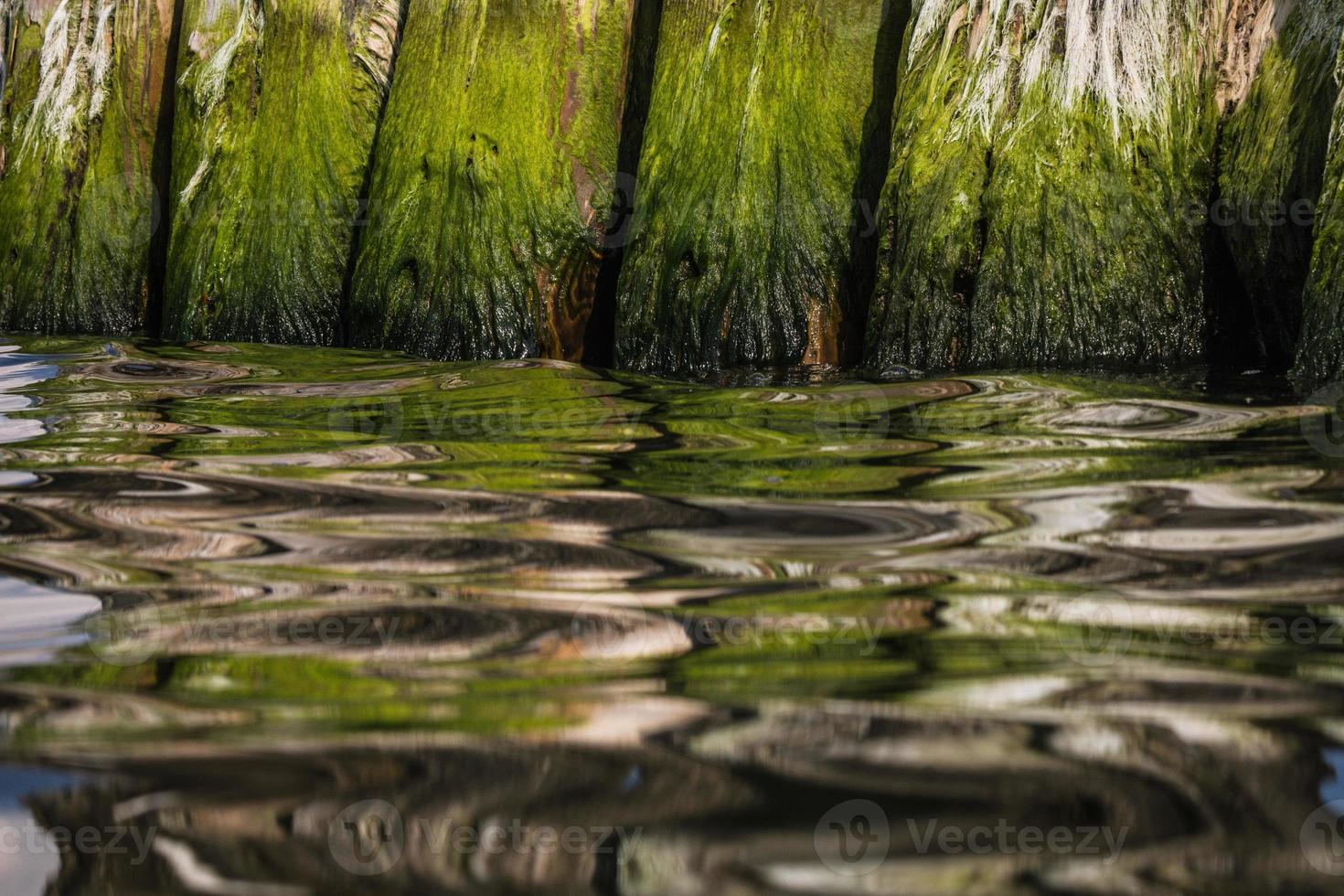 trä vågbrytare stolpar med reflektioner foto