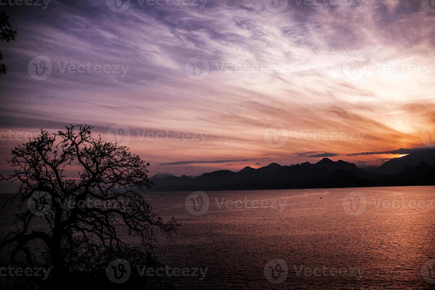 solnedgång och torrt träd. foto