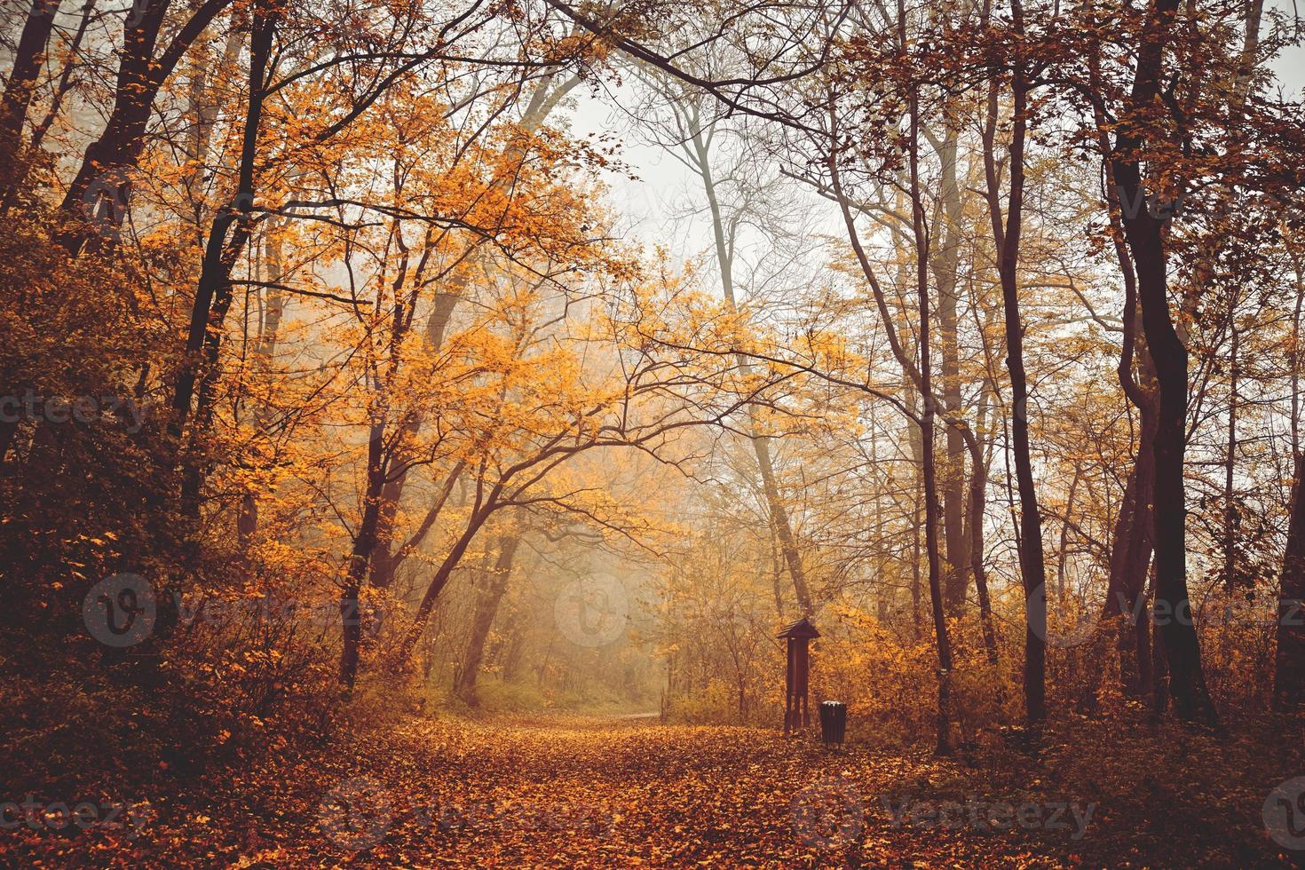 höst skogsväg foto