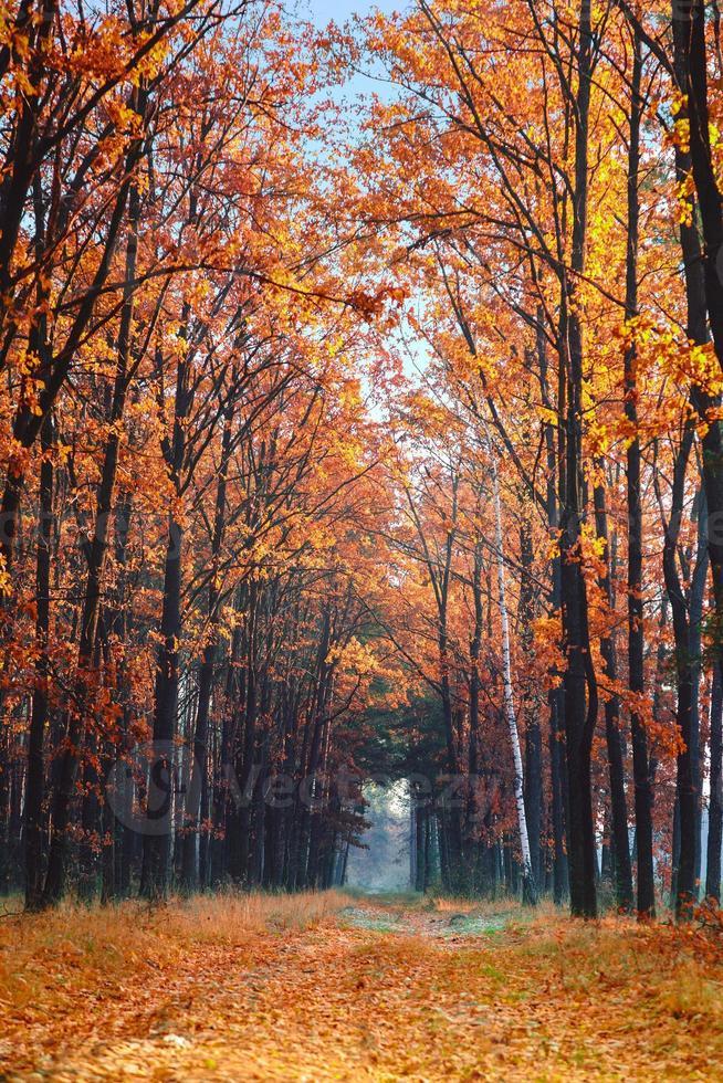 gränd i höstens park. foto
