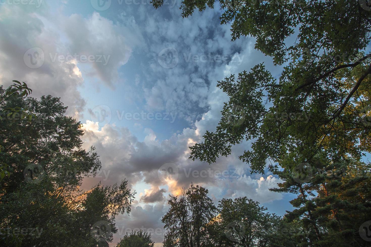 träd på kvällen foto