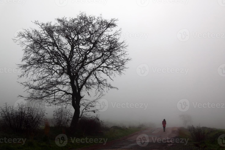träd och väg foto