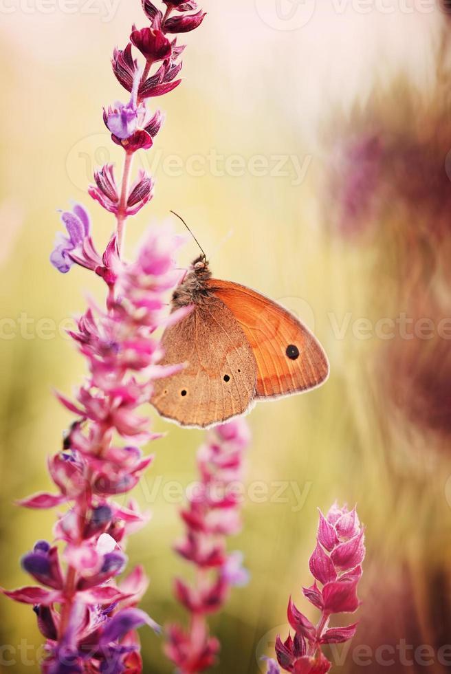 fjäril på blomman foto