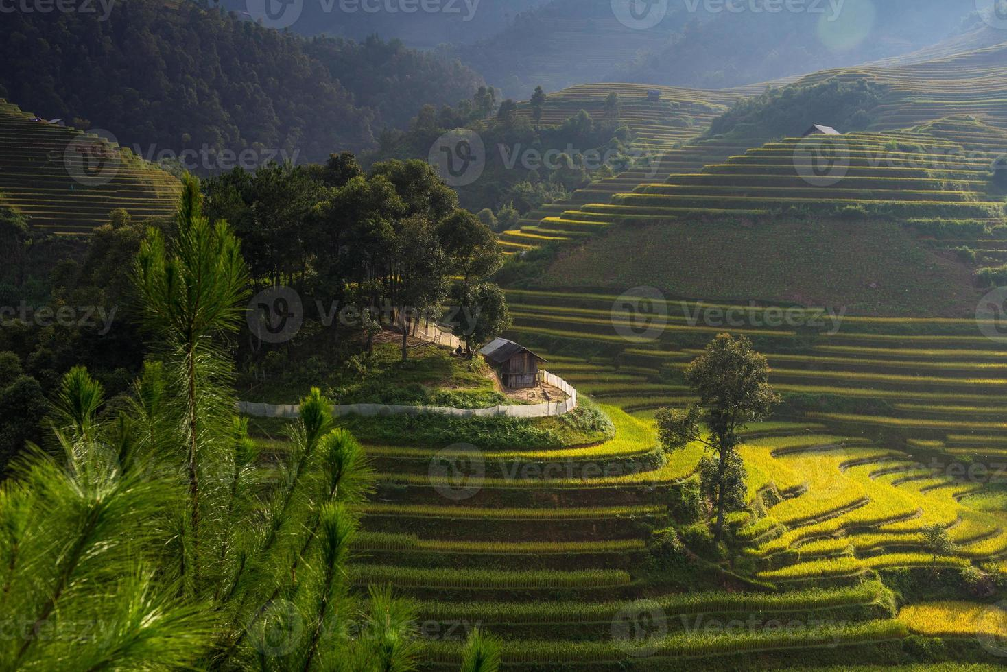risfält på terrasserade i Vietnam foto