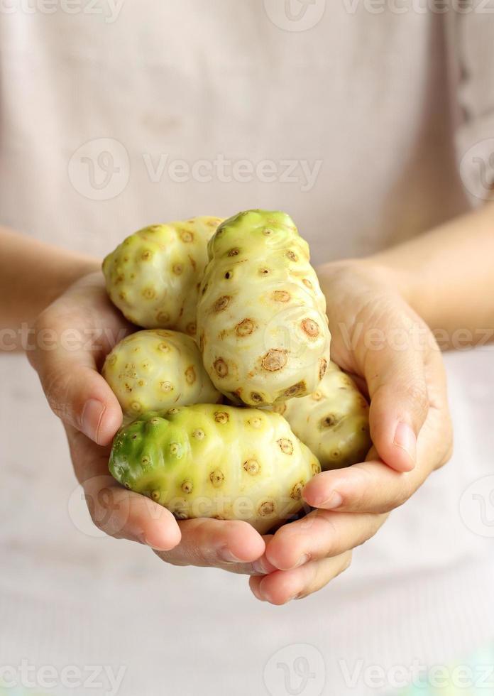 hand som håller stor morinda. foto