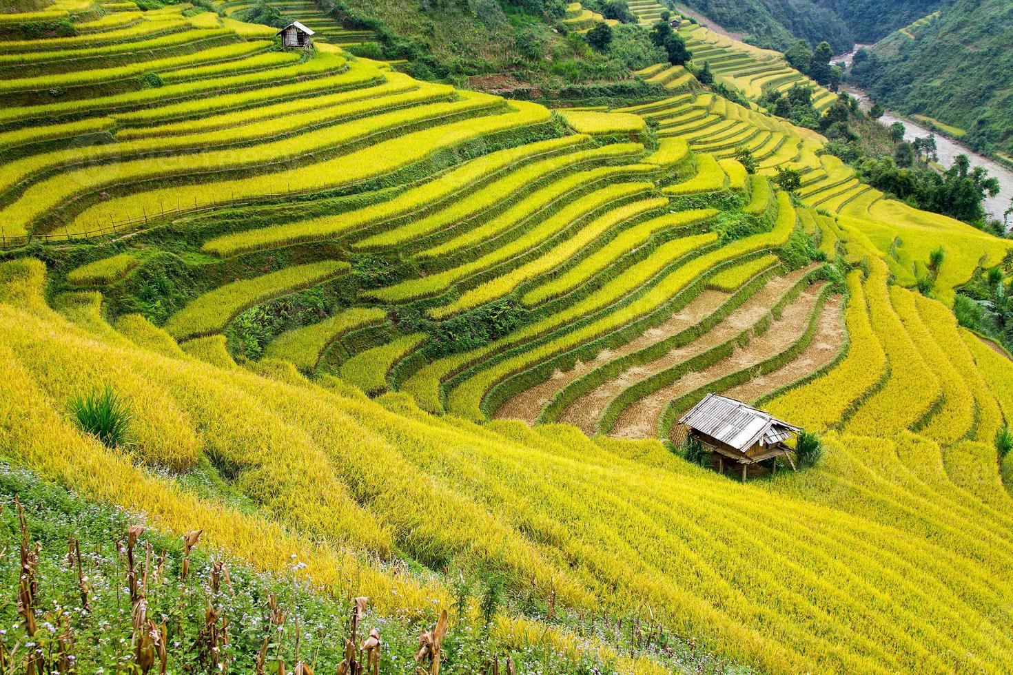 terrasserade fält i den norra bergiga regionen i Vietnam foto