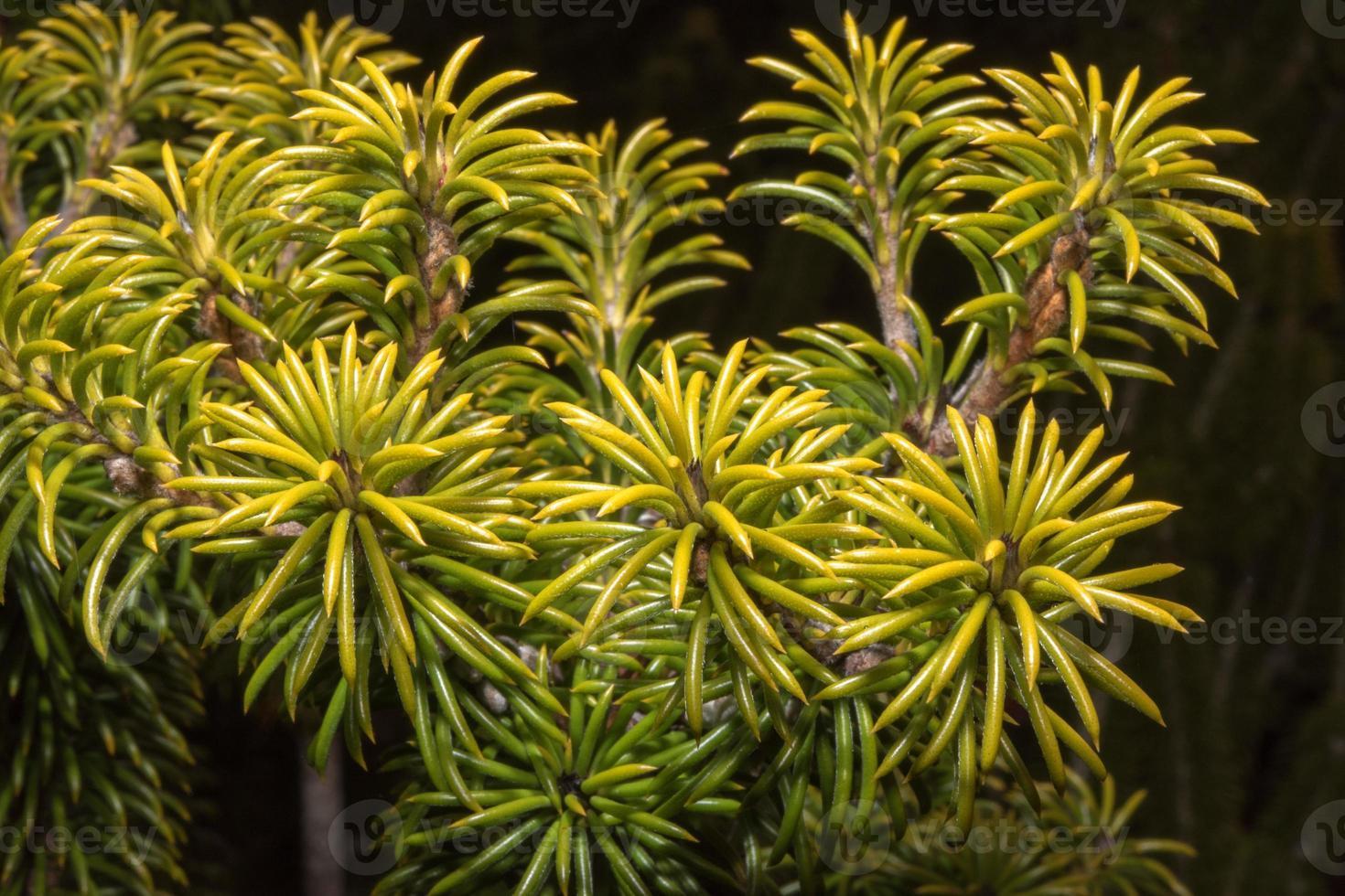 australien bush blommor flora detalj foto