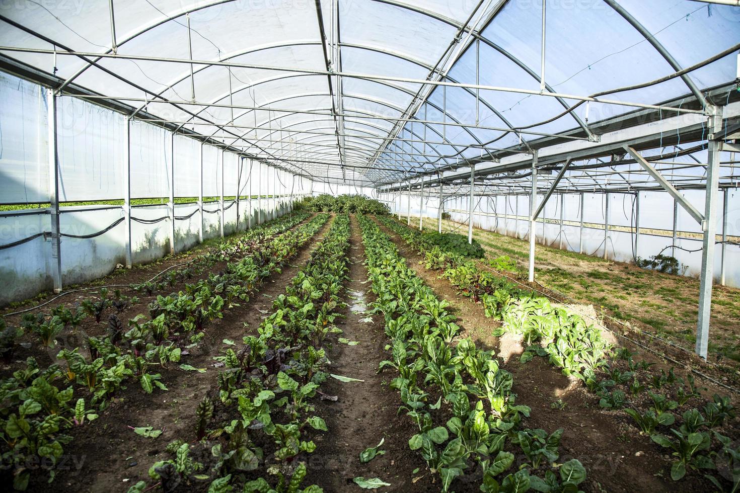 plantera blommor i växthuset foto