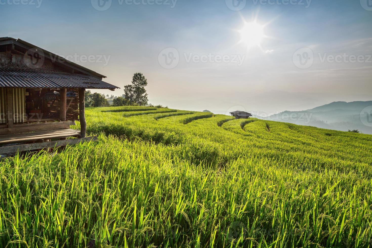 terrasserat risfält foto