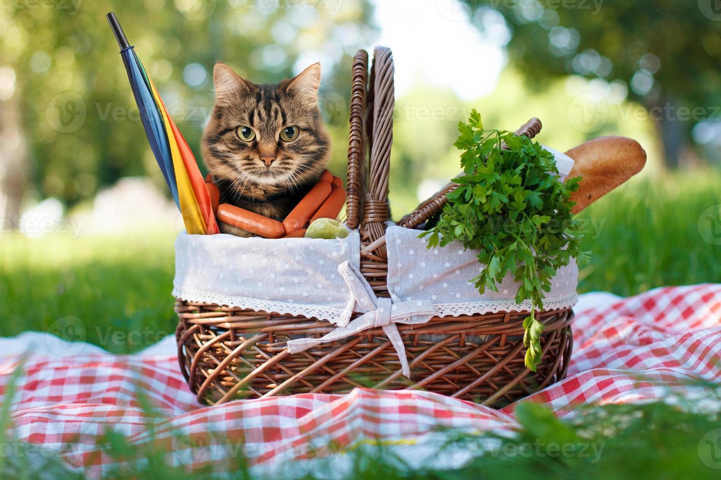 rolig katt på en picknick. vacker sommardag foto