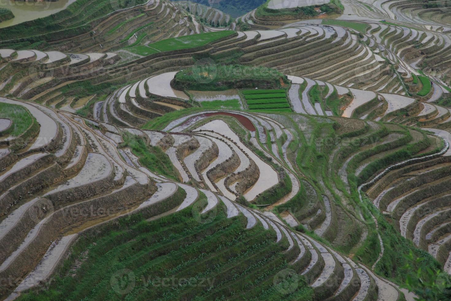 longji ris terrasser, longsheng foto