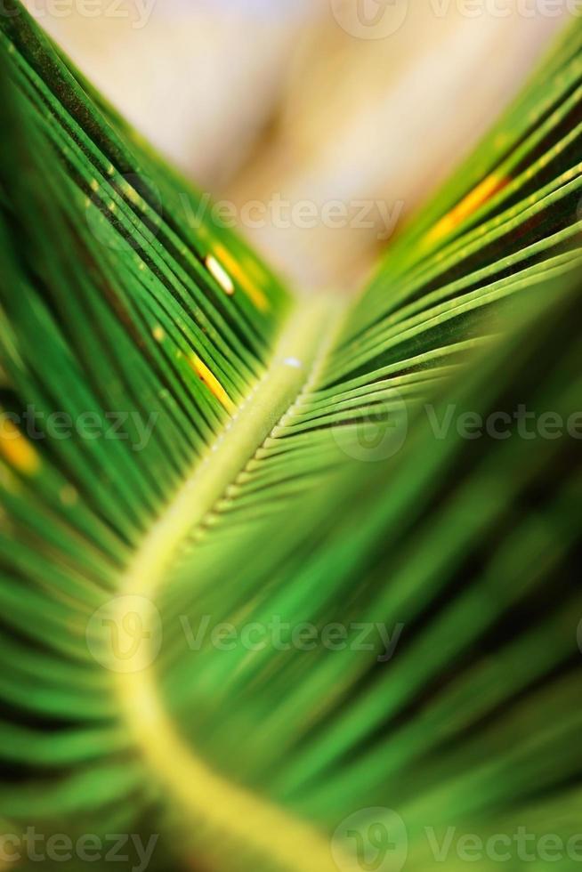 abstrakt natur: makro av grönt palmträdblad foto