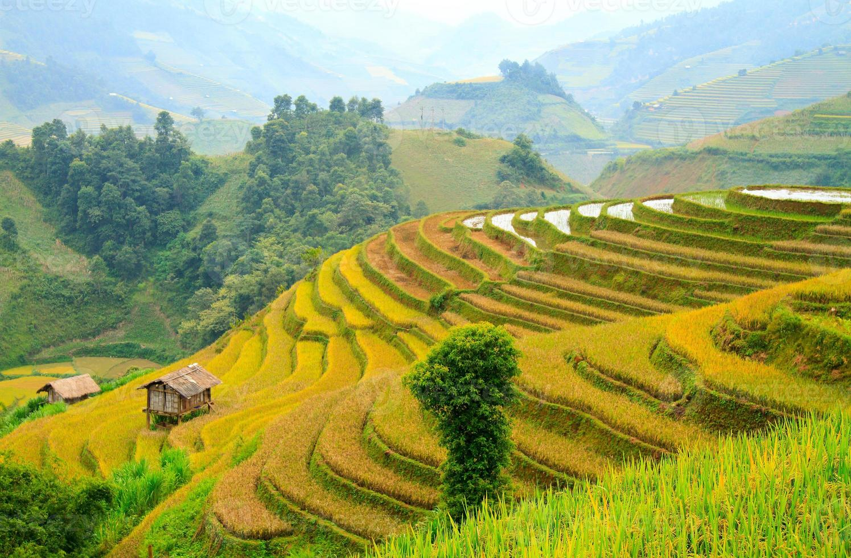 terrasserade fält, yen bai, Vietnam foto