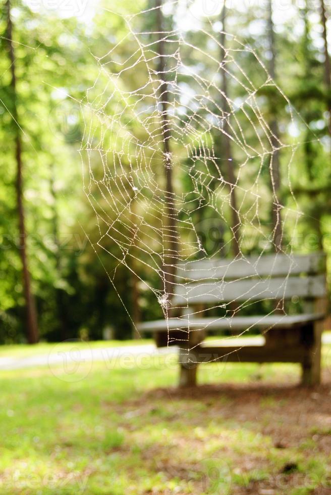 tom bänk i bakre droppe spindelnät foto