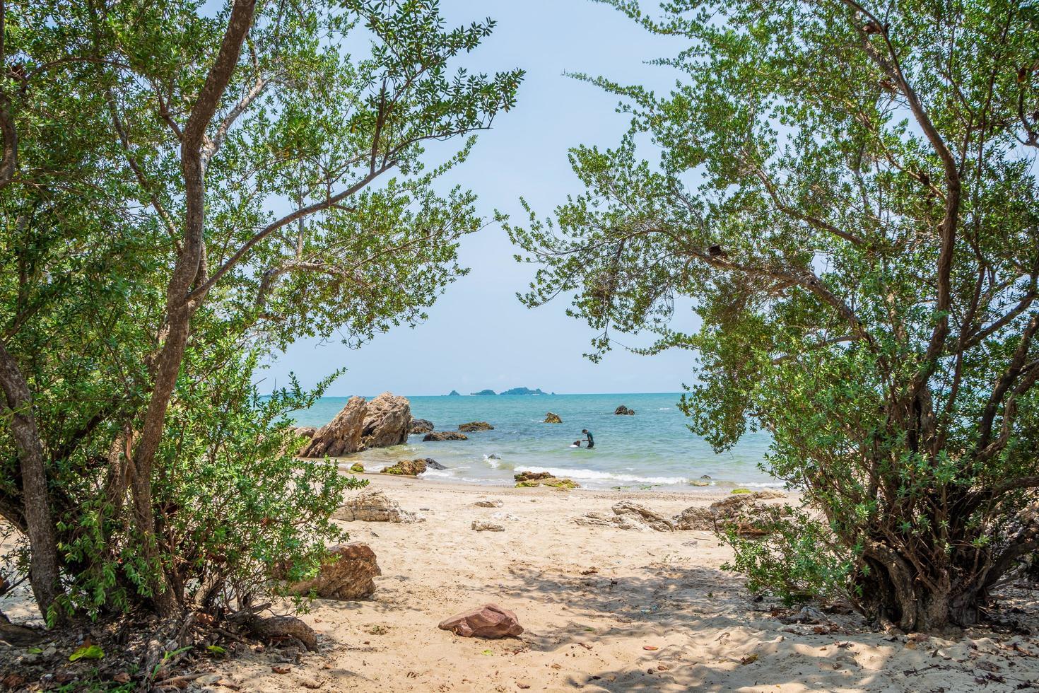 havsutsikt genom träd foto