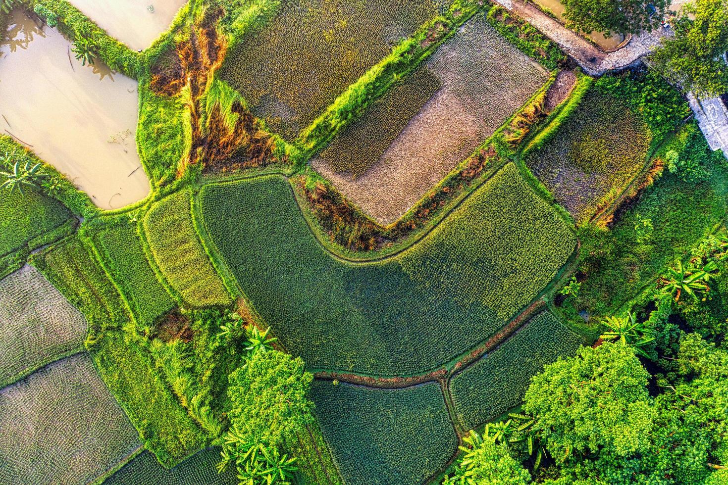 Flygfoto över fältet med grönt gräs foto