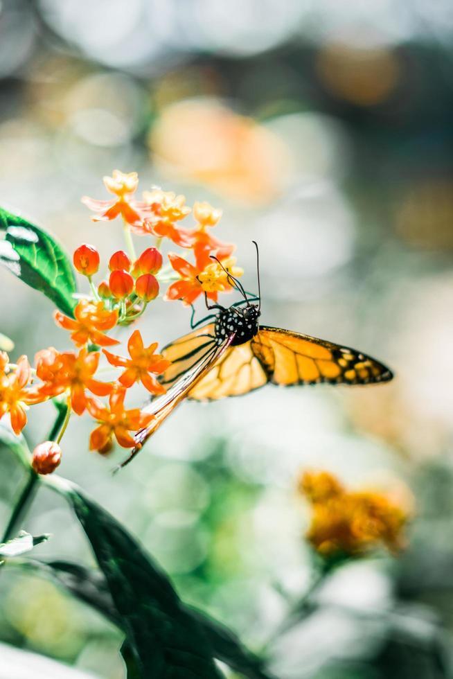 fjäril på blomma foto