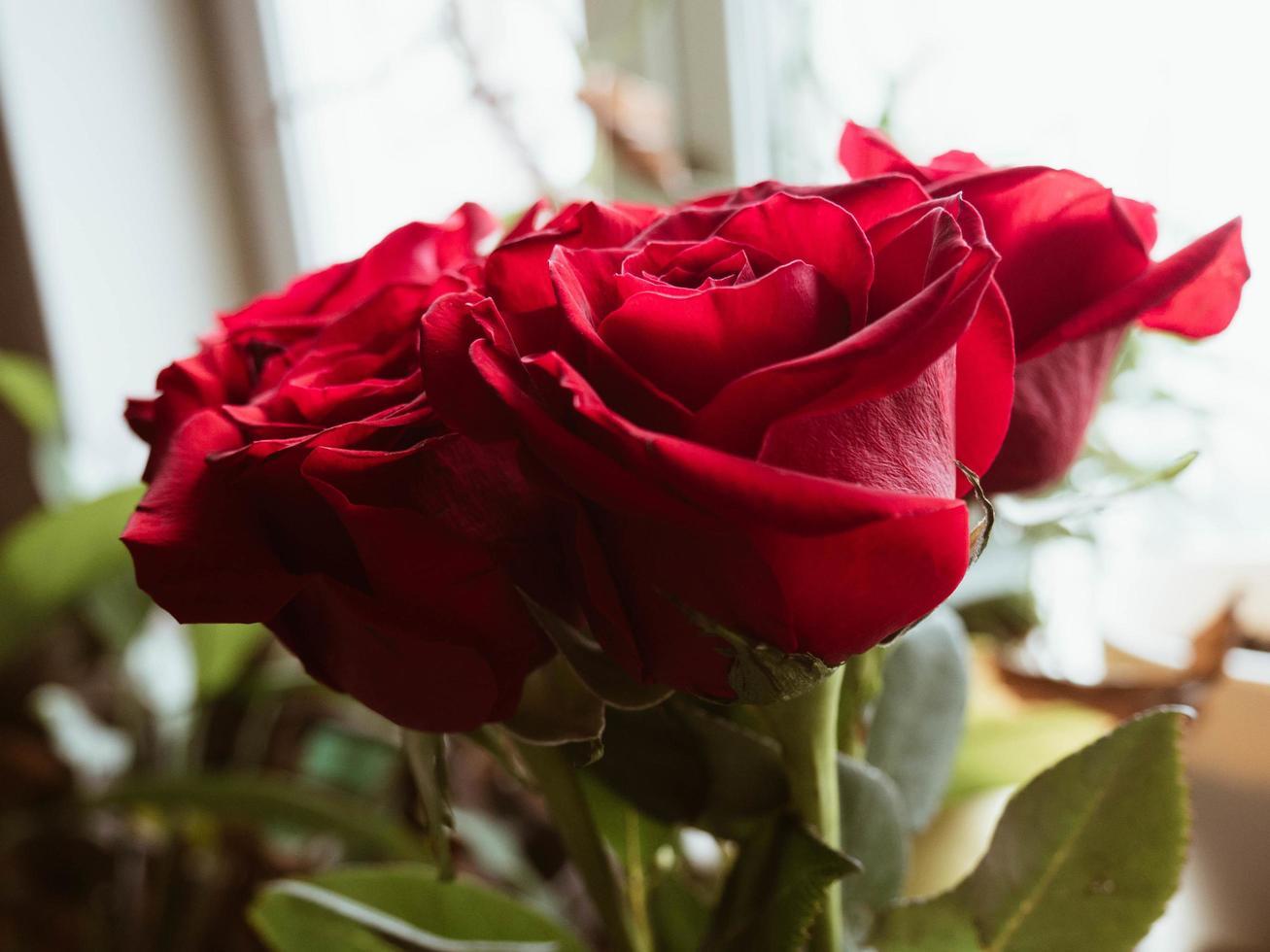 närbild av rosor foto