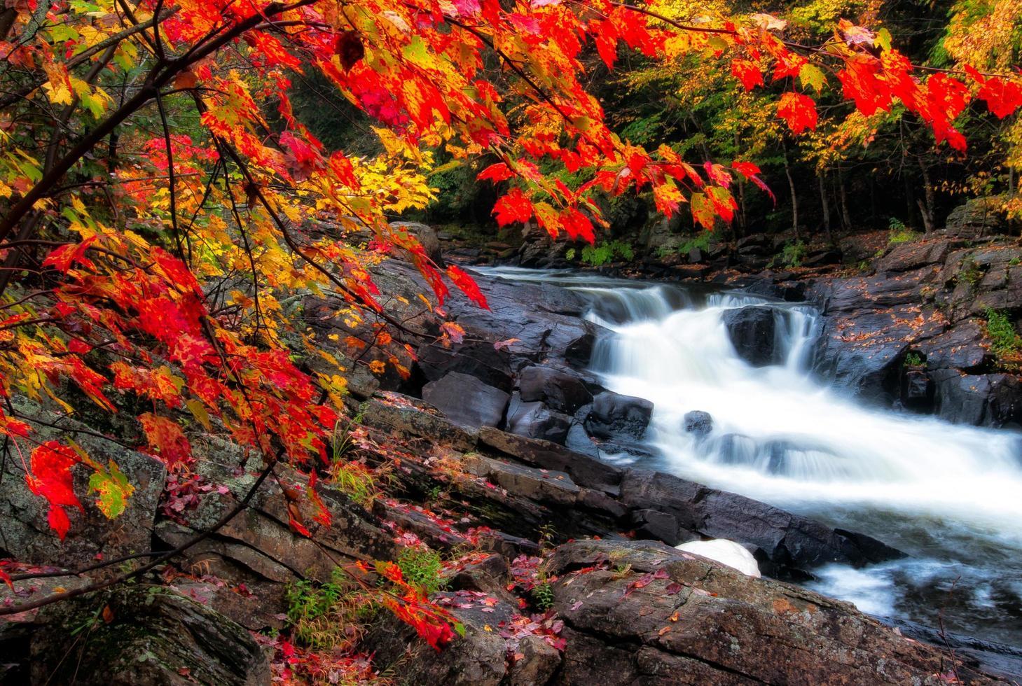 höstlöv och vattenfall foto